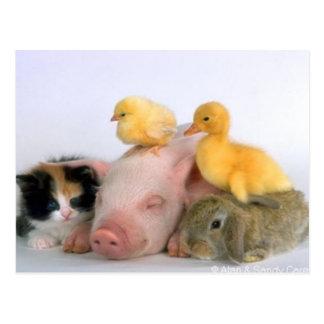 Carte Postale Temps de petit somme pour les animaux