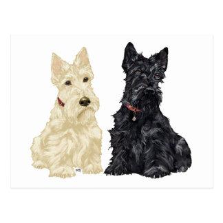 Carte Postale Terriers écossais blonds comme les blés et noirs