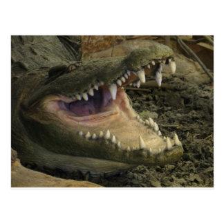 Carte Postale Tête d'alligator