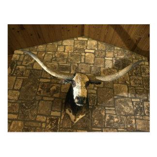 Carte Postale Tête de boeuf de longhorn montée sur le mur