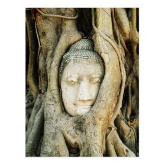 Carte Postale Tête de Bouddha dans le figuier. Ayutthaya,