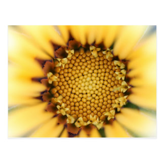 Carte Postale The yellow flower