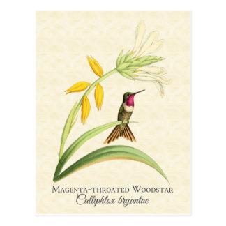 Carte postale Throated magenta d'art de colibri