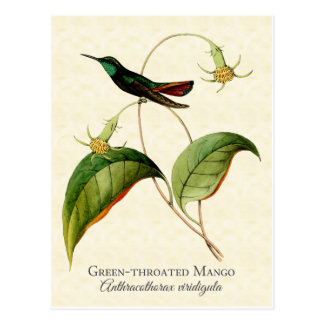 Carte postale Throated verte d'art de colibri de