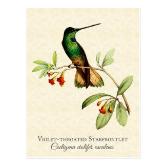Carte postale Throated violette d'art de colibri