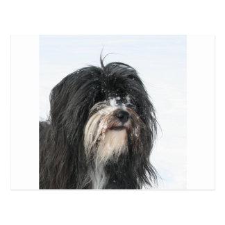 Carte Postale Tibet_Terrier