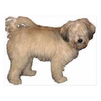 Carte Postale Tibétain-Terrier complètement