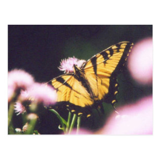 Carte Postale TigerSwallowtail