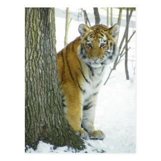 Carte Postale Tigre CUB dans la neige jetant un coup d'oeil
