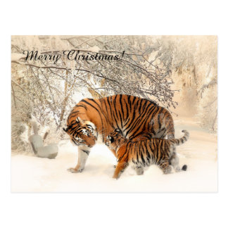 Carte Postale Tigre de bébé et maman de tigre dans une forêt