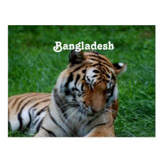 Carte Postale Tigre de Bengale royal
