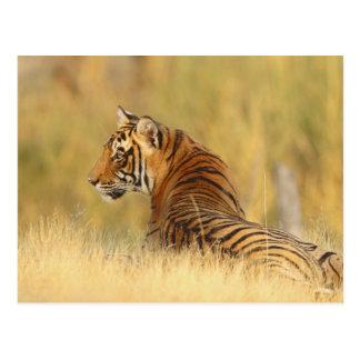 Carte Postale Tigre de Bengale royal se reposant en dehors de la