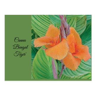 """Carte postale - tigre de Canna """"Bengale """""""