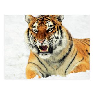 Carte Postale Tigre fâché se situant dans la neige