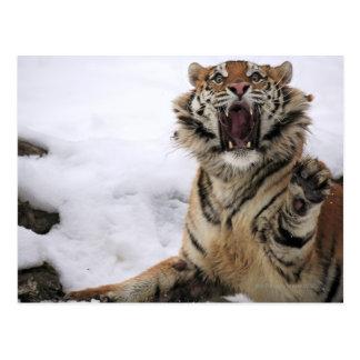 Carte Postale Tigre sibérien (altaica du Tigre de Panthera)