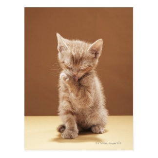 Carte Postale Toilettage de chaton