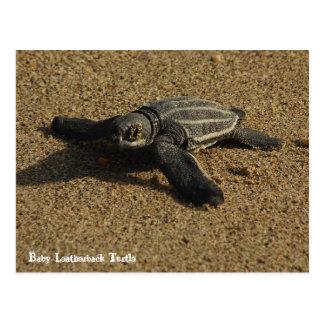 Carte Postale Tortue de Leatherback de bébé
