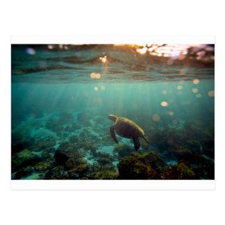 Carte Postale Tortue de mer verte de lagune de Galapagos
