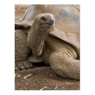 Carte Postale Tortue de terre de Seychelle Aldabran