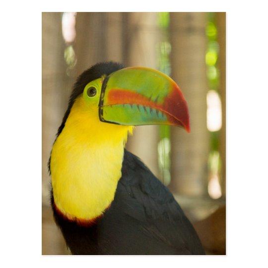 Carte Postale toucan