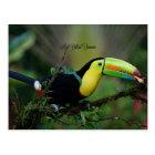 Carte Postale Toucan affiché par quille, oiseau tropical