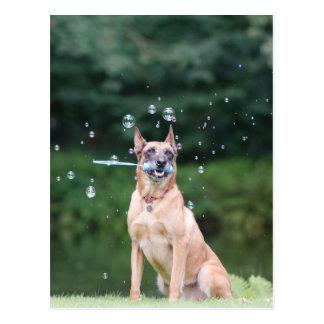 Carte Postale Tour de chien : Des bulles de savon fournir