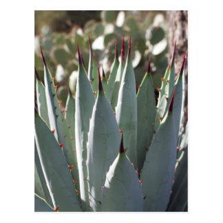 Carte Postale Transitoires d'agave
