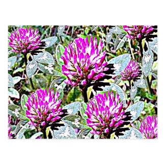 Carte Postale Trèfle violet du Vermont