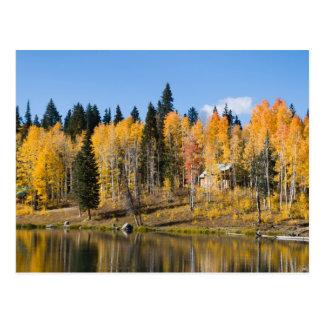 Carte Postale Trembles d'automne aux ressorts de glacier