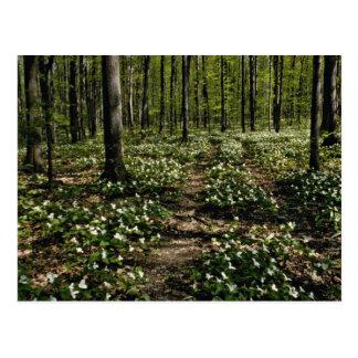 Carte Postale Trilliums, arborétum de Morgan, rouge de Montréal,