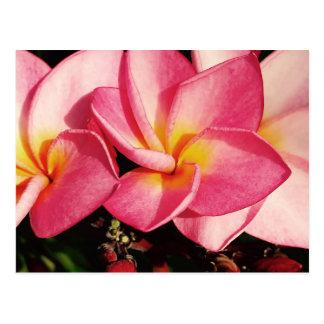 Carte Postale Trio hawaïen de Frangipani de Plumeria de coucher