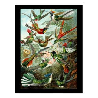 Carte Postale Trochilidae d'Ernst Haeckel