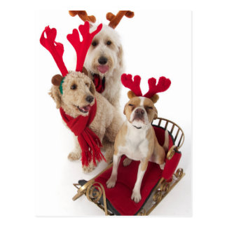 Carte Postale Trois chiots se reposant au temps de Noël