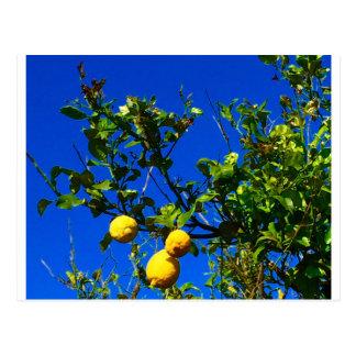 Carte Postale Trois citrons siciliens