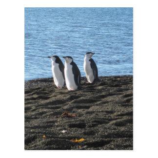 Carte Postale Trois pingouins curieux