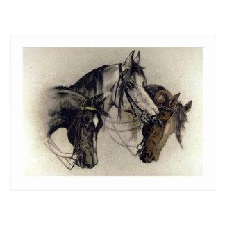 Carte Postale Trois têtes de cheval tirées par la main vintages