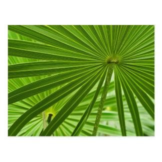 Carte Postale Tropical