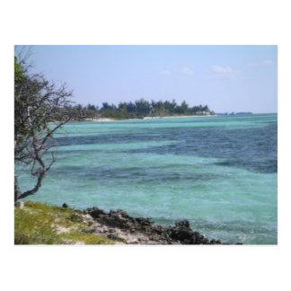Carte postale tropicale