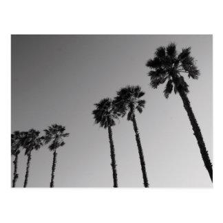 Carte postale tropicale de palmiers