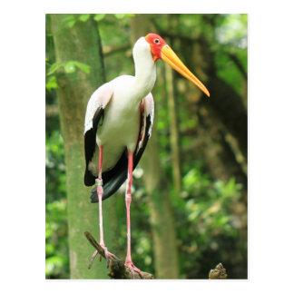 Carte postale tropicale d'oiseau