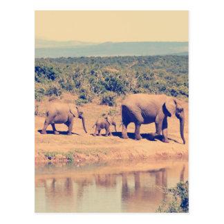 Carte Postale Troupeau d'éléphant