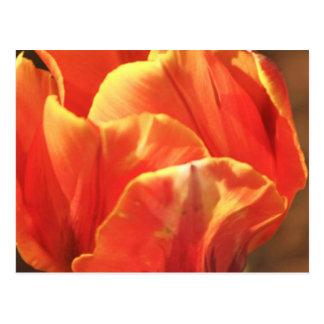 Carte Postale Tulipe sur le feu