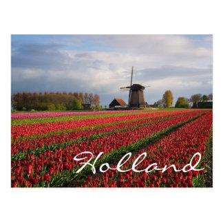Carte Postale Tulipes rouges et un moulin à vent