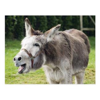 Carte Postale Un âne