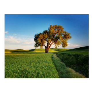 Carte Postale Un arbre solitaire entouré par Rolling Hills de