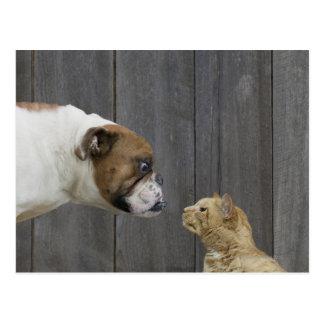 Carte Postale Un bouledogue et un chat sont faces à face dans un