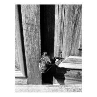Carte Postale Un chien jetant un coup d'oeil d'une porte, plan