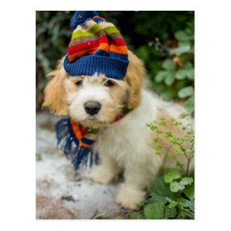 Carte Postale Un chiot doux de Cavachon dans un casquette et une