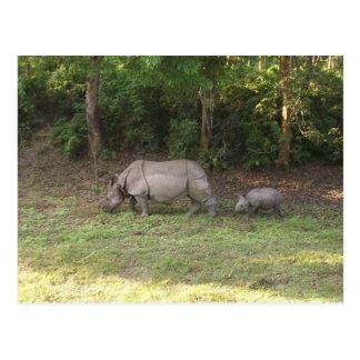Carte Postale Un parc national Népal de Chitwan de rhinocéros à
