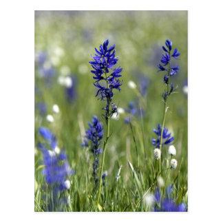 Carte Postale Un pré de montagne des fleurs sauvages comprenant